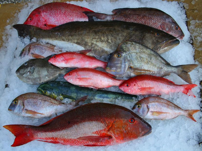 Mayport fisheries, Jacksonville fresh seafood, fresh fish, seafood wholesale, shrimp, oysters