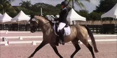 Preparing your horse to compete from young horse through Grand Prix.