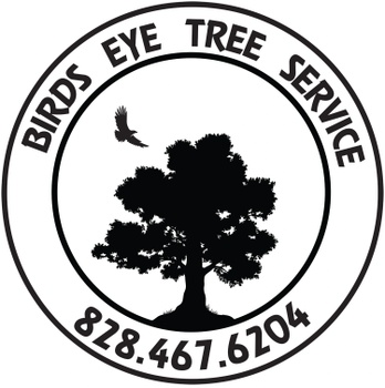 Innovative solutions - Certified arborists