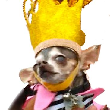 Northern California's Original Chihuahua Beauty Contest.