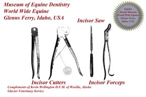 Historic Incisor Cutters, Saw and Incisor Foceps