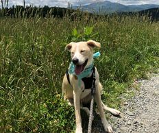 Dog sitting in field wearing teal bandana. Mountains in the background.  she has a slight smile