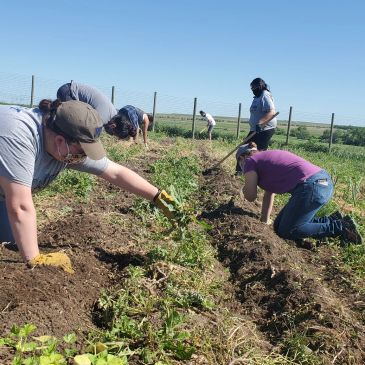 Interns building the food sovereignty movement on Rosebud by tending the community garden.