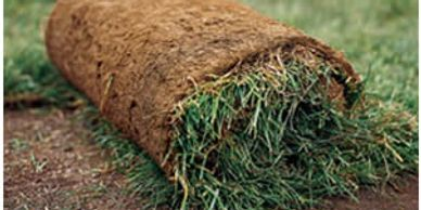Sod Grass Seed Fertilizer
