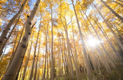A picture of the Pando forest, the largest organism by mass in the world.