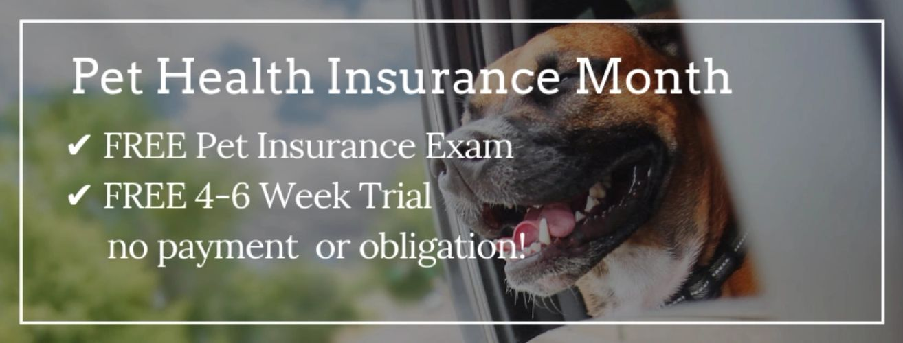 Pet insurance month, dog with head out window, westbrook vet clinic