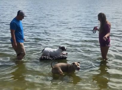 A client of ours showing his parents how Furbaby Bean Beds can float while playing in the water.