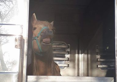 horse on his way from British Colombia to Ontario