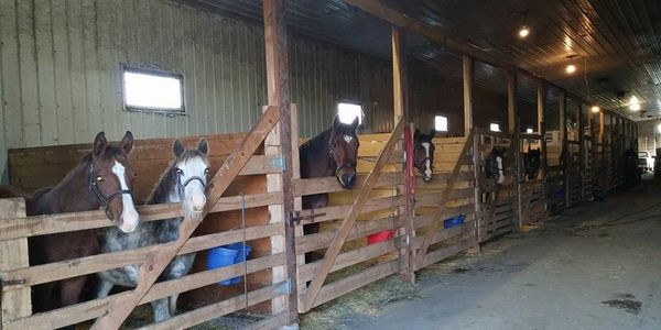 horses having a rest at our Thunder Bay Ontario Layover