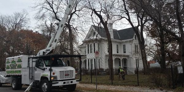 Tree trimming at the Truman home