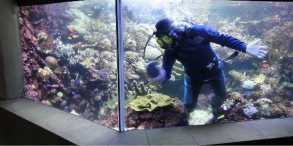 We gladly provide aquarium cleaning, delivery and set ups to the Tri-state area. We also provide aqu