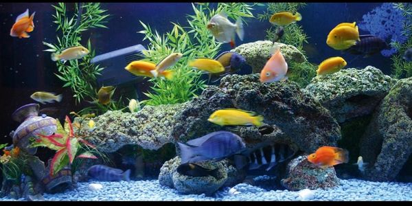 We Specialize in  a variety of African, South American & Texas Cichlids. Don't be afraid to ask abou