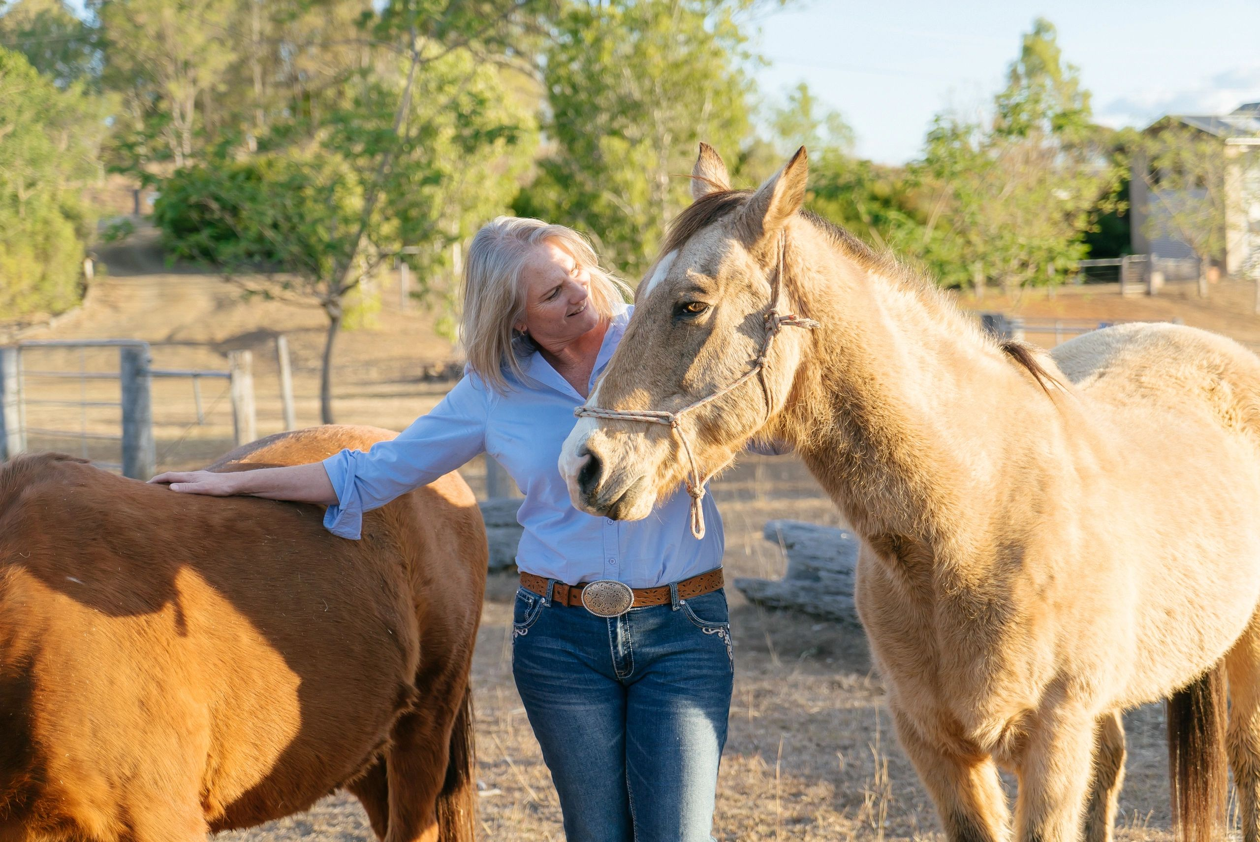 Equine therapy and learning, working with horses to create awareness, acceptance and congrency.