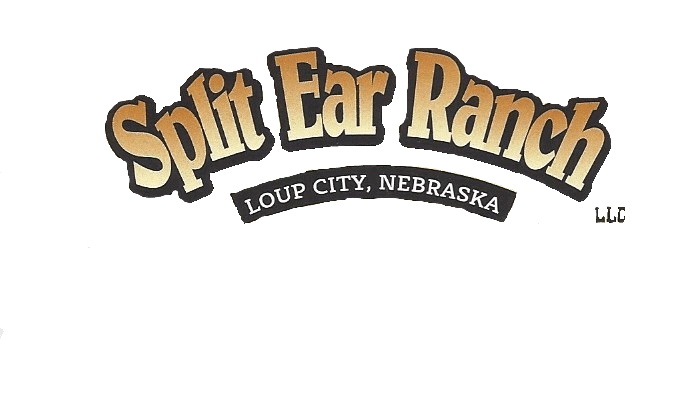 Split Ear Ranch Loup City, NE