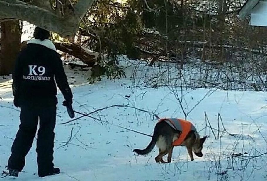 Search Dogs are an excellent starting tool to figure out where the animal is, or what exactly happen