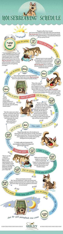 Dowdy Farms English Mastiffs - For Sale, English Mastiff