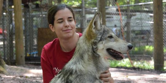 Carly Hylen sits with a juvenile gray wolf