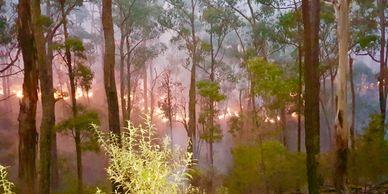 Bushfire fire bushland Australia fuel reduction burn Victoria Australia emergency survival preparedness