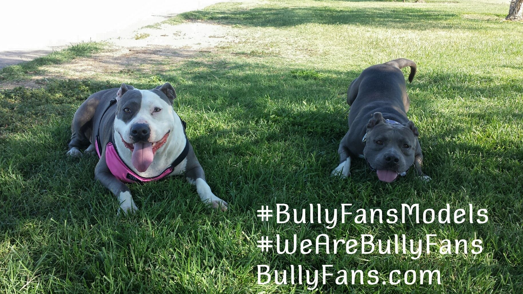 Bully Fans models Kali and Daisy Mae model Bully Fans products