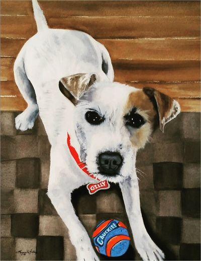Gilly, the Jack Russell Terrier