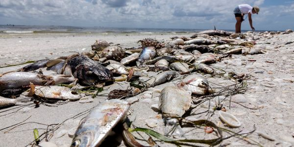Red Tide florida water pollution environment