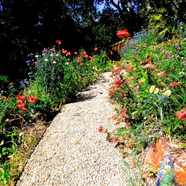 Garden Path with Abundant Flowers