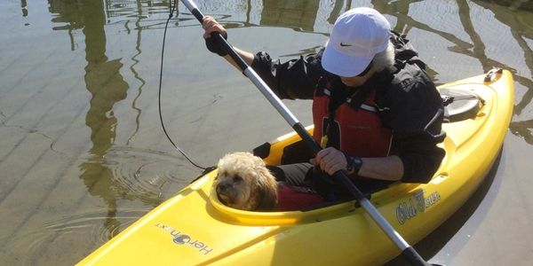Teddy bear Zuchon (Shichon or Shih Tzu Bichon) puppy Kayaking - Small breed Happy healthy smart comical affectionate highly trainable great service or therapy dogs  excellent companion or family dog non-shed hypoallergenic - www.tinyteddys.com - Tiny Teddies B.C, Alberta Canada, Worldwide