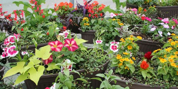 Annual Flowers, Perennial Flowers, Planter Boxes