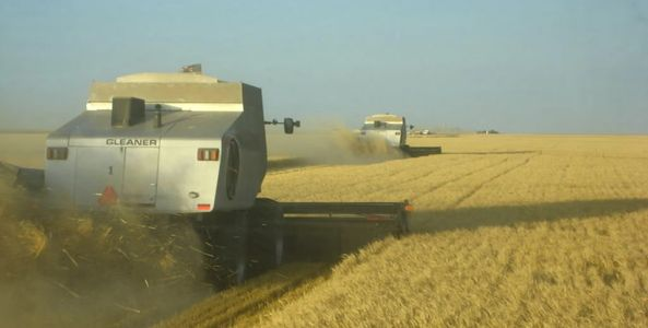 Custom harvest grain hauling trucking wheat corn barley milo corn soy beans kansas colorado nebraska