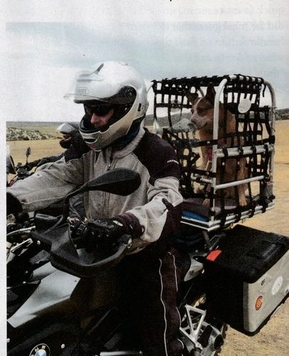 Picture of author and his Australian cattle dog George motorcycling training