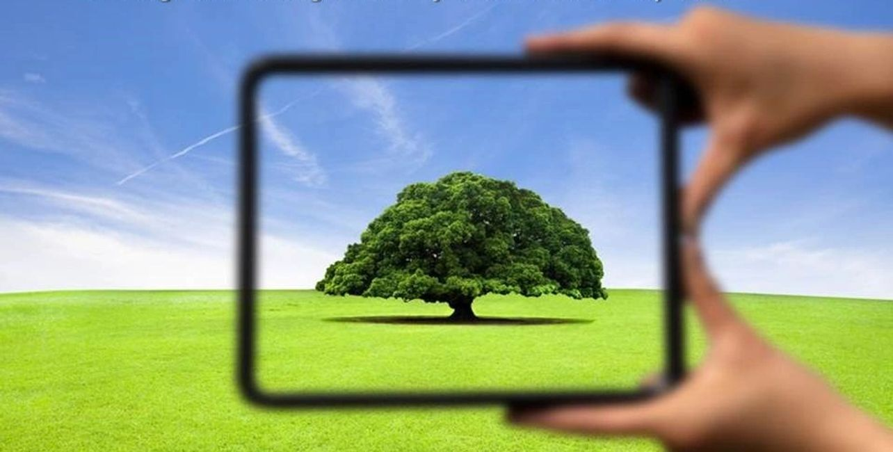 hands with frame highlighting a tree in the field