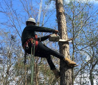 Texas Tree Elite tree trimming and removal service