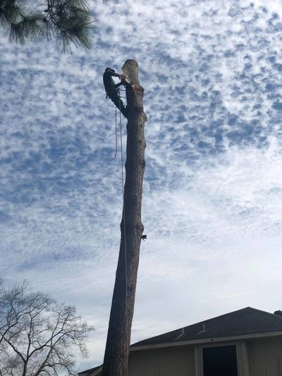 Texas Tree Elite expert tree removal of hazardous trees.