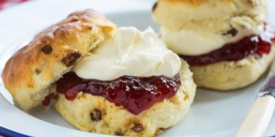 Scones and cream for tea