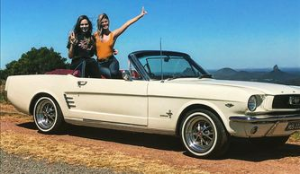 Mustang on tour in the Glasshouse Mountains