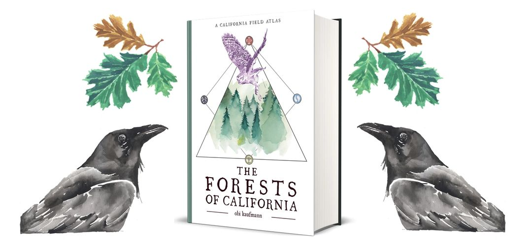 Now available, the new book from Obi Kaufmann THE FORESTS OF CALIFORNIA