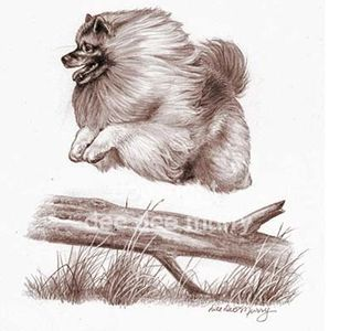 Keeshond Breed Plate