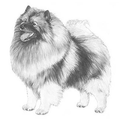 Click for Keeshond Standard