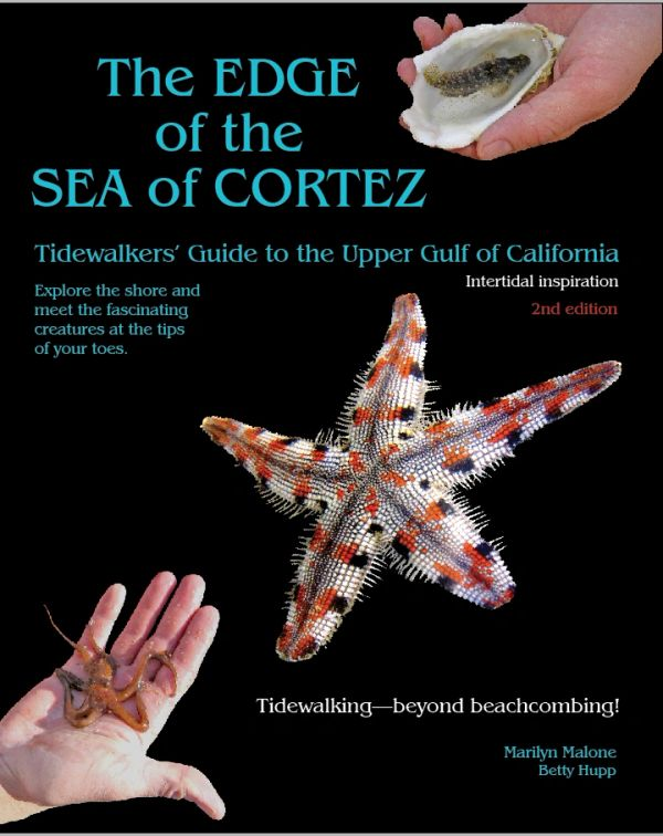 The cover of the The Edge of the Sea of Cortez - Tidewalkers' Guide to the Upper Gulf of California