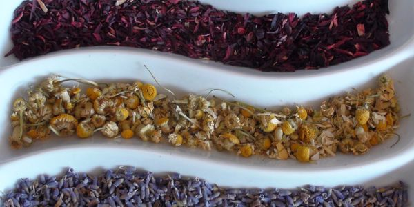 Herbal Medicine Dr Jill Stansbury BG Healing Arts herbs Battle Ground Apothecary & Natural Goods