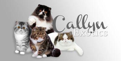 callyn cattery