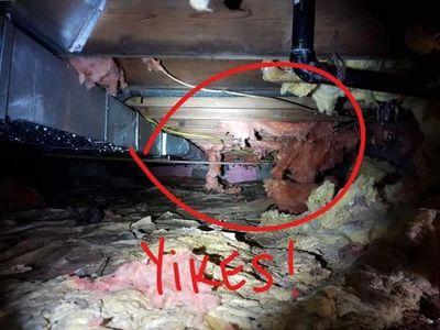 Insulation Removal mice rats pest control services. Little Rock Sherwood Maumelle Lonoke Cabot Beebe