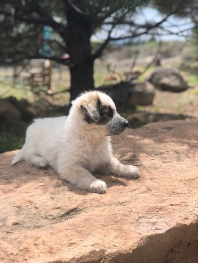 Puppy resting on a rock in our play area.