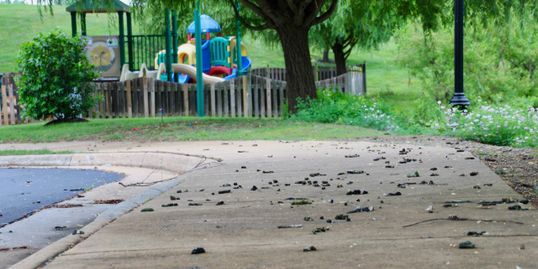 Goose poop on sidewalk.  Geese feces.  HOA.  Playground.  Health risk. e-coli. salmonella giardiasis