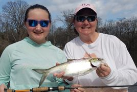 Hickory and American shad fishing trips