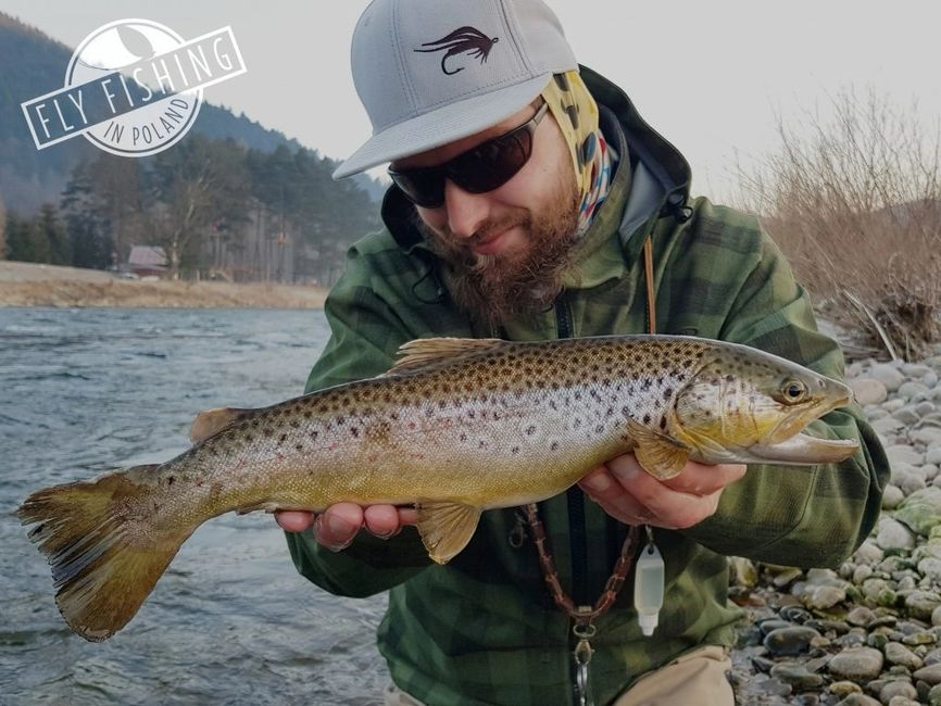 Fly Fishing in Poland Dunajec River brown trout