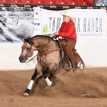 sliding stop reining showing abby lengel gotta twist it up show horse