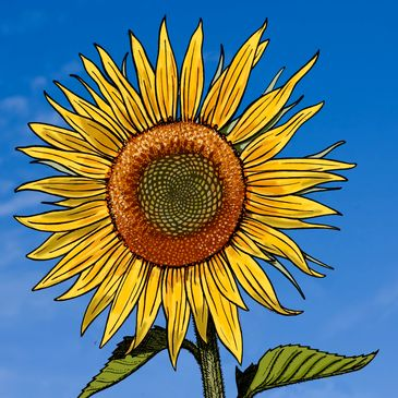 A picture of a sunflower. Click here to download copies of our annual reports.