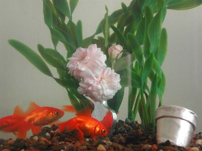 goldfish in a tank with plastic plants swimming around a silver vase brooch and tiny silver pot
