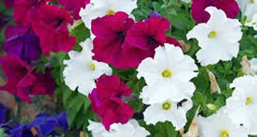 Plant flowers metairie and landscaping